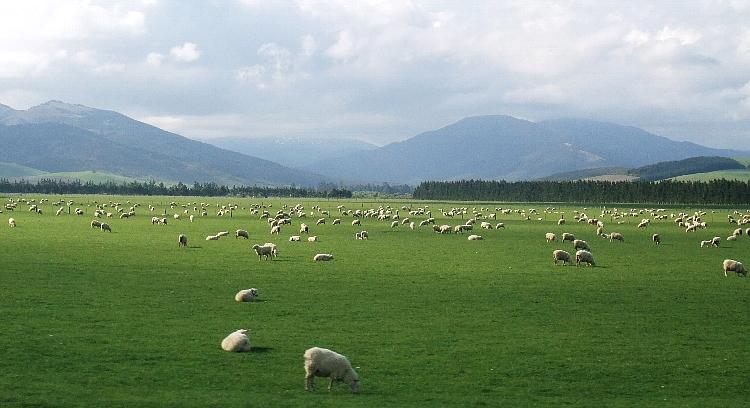 【大自然】ニュージーランドに昔の古き良き日本の姿があった!