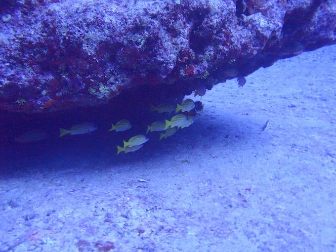 ダイバーならシミラン諸島へ行くべき