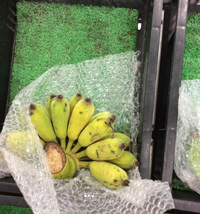 南国バナナ