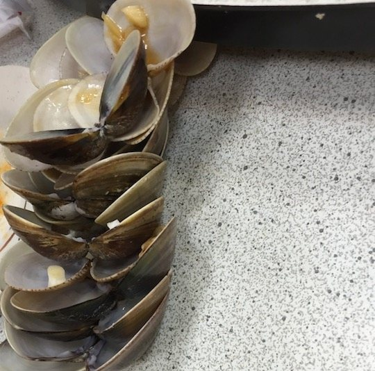 テーブルの上に置かれた貝殻