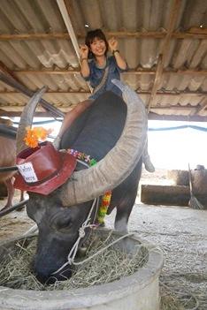 バーンクワイ(バッファロービレッジ)で水牛に乗る