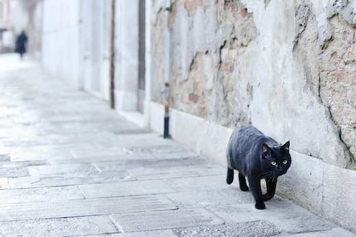 裏路地の猫