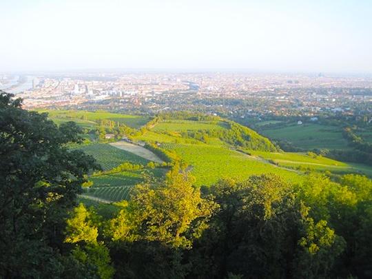 ウィーンの森を散策しよう!ウィーンの森おすすめの観光スポット3選