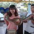爬虫類好き必見!バンコクで人気の2大珍スポット「ルンピニ公園」周辺