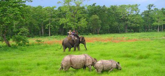 チトワンでジャングルサファリ