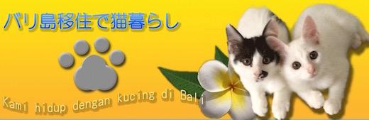バリ島移住で猫暮らし