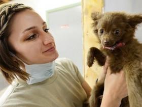 タイの動物病院