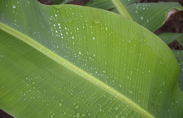 お皿がバナナの葉