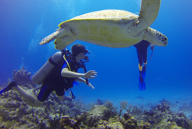 アクマルの海ガメ