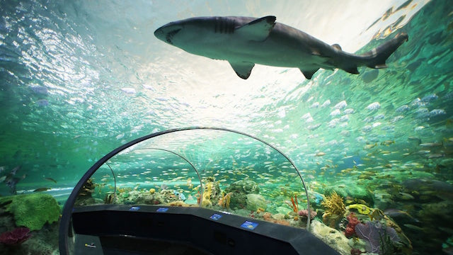 Ripley's Aquarium Of Canada(リプレイ水族館)