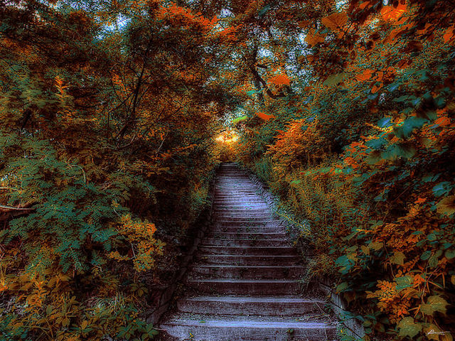 High Park(ハイパーク)の紅葉