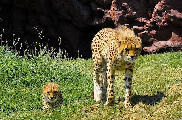 Toronto Zoo(トロント動物園)