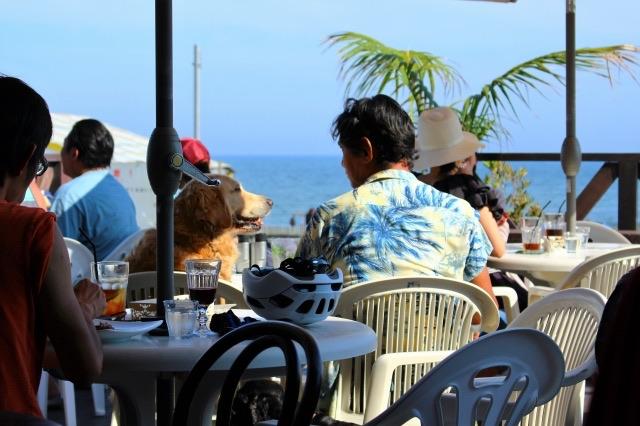 犬と海辺のカフェ