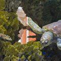 ニュージーランドのオークランドにあるケリー・タールトン水族館に行ってみた