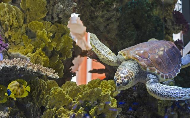 水族館の亀
