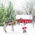 フランス人はクリスマスにかける情熱がすごかった!フランス流クリスマスの過ごし方