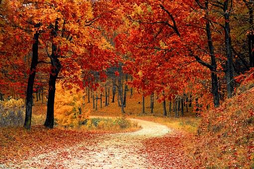 カナダの秋