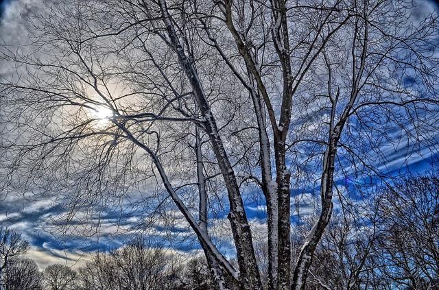 トロントの冬