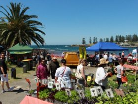 キアマ(Kiama Seaside Markets)