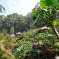 タイのチェンマイでソンテウに乗ってドイプイ村まで行ってきた
