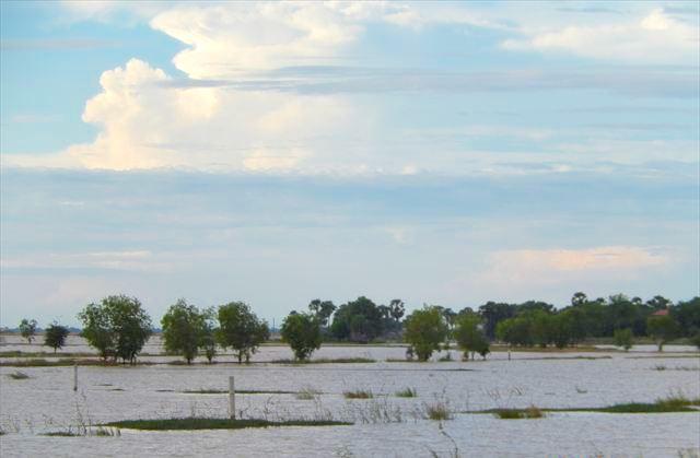 雨期の田んぼ