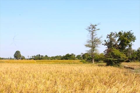 周辺の田んぼ