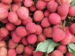 6~7月に香港にいるなら絶対に食べたいフルーツ・ライチの魅力