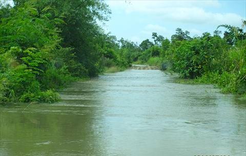 畑に行く道路も冠水