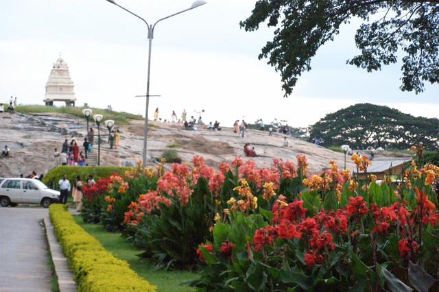 植物園にある丘