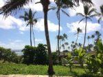 癒しを求めるハワイの旅・カウアイ島の魅力に迫る