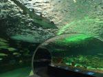 カナダ最大級!トロントの水族館「RIPLEY'S AQUARIUM OF CANADA」