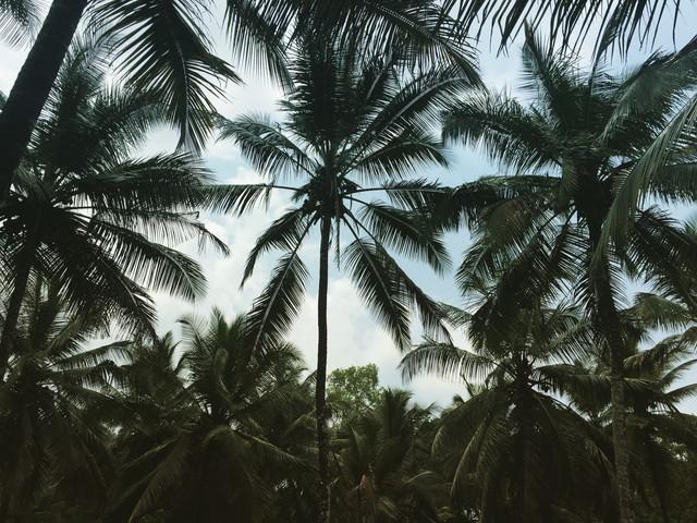 スリランカのビーチ