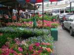 タイらしさたっぷり!平日限定のチャトゥチャック市場の植木市に行ってみた