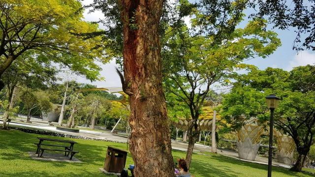 木にいるリス