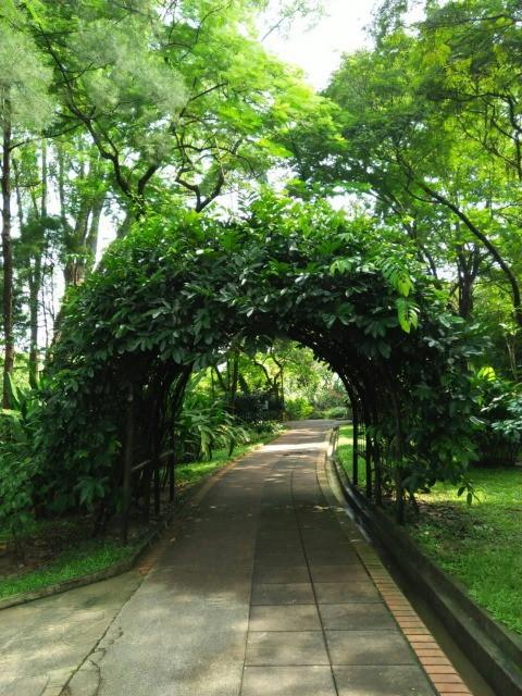 葉っぱのトンネル
