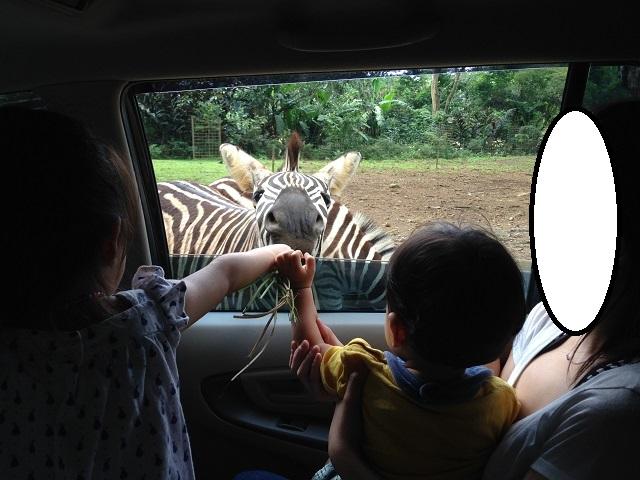 タマンサファリ(Taman Safari)