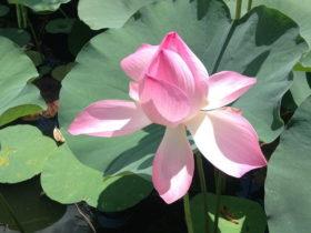 ベトナムの花