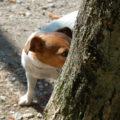 海外でペットと暮らそう!イタリアでペットを飼う方法