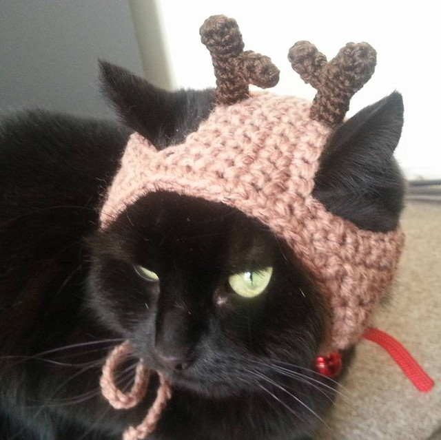 猫用の帽子
