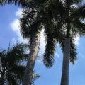 ハノイの天気とベストシーズンとは?常夏ではなかった?ベトナム在住者が教えます