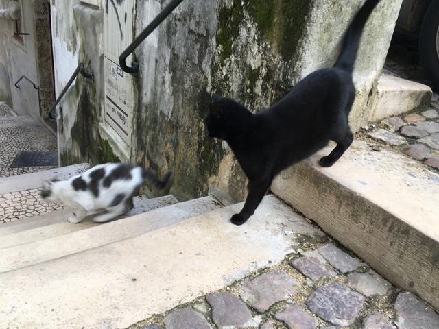 ポルトガルの猫