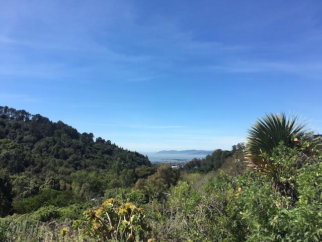 カルフォルニアの山