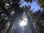 カリフォルニア・サンフランシスコでハイキングを楽しむ!探し方から週末旅行でおすすめスポットまで一挙公開