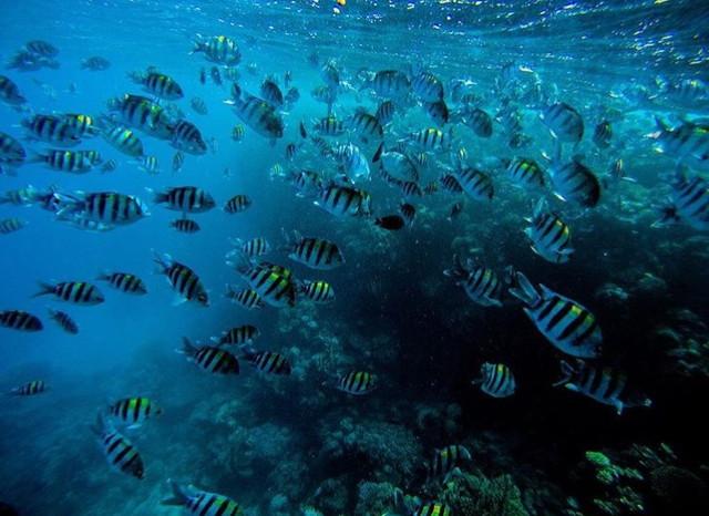 バッティカロアの海