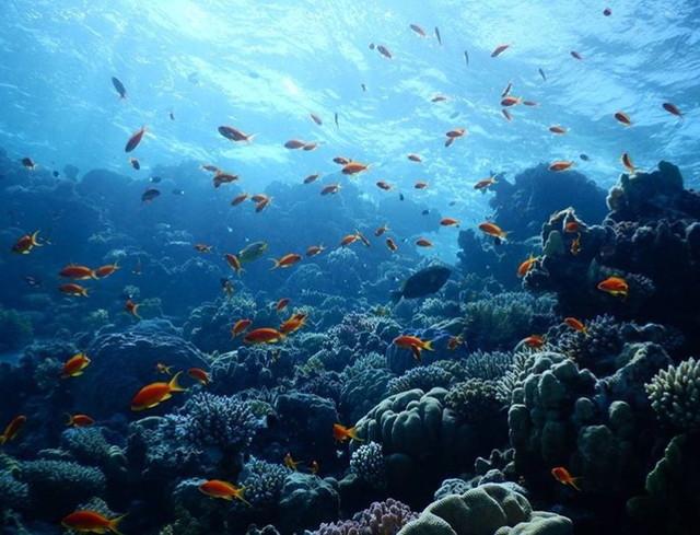 カルピティアの海