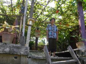 フルーツ園のおばあちゃん