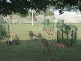 スリランカのサファリ
