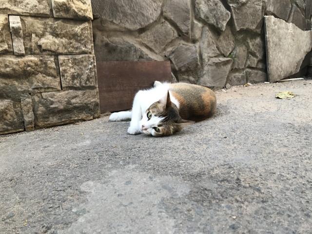 ベトナムにいる猫