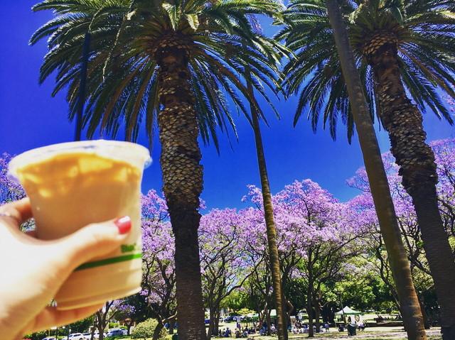 公園とカフェ