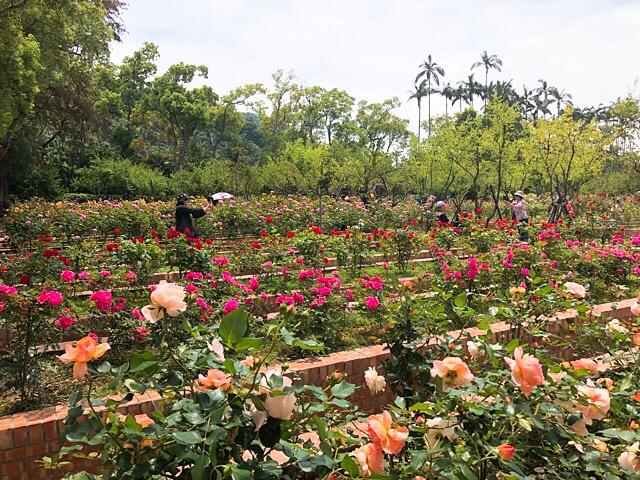 バラ園「玫瑰園(メイ・グェイ・ユェン)」